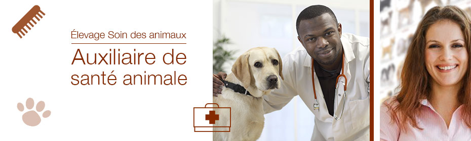 formation aide soignante animaux