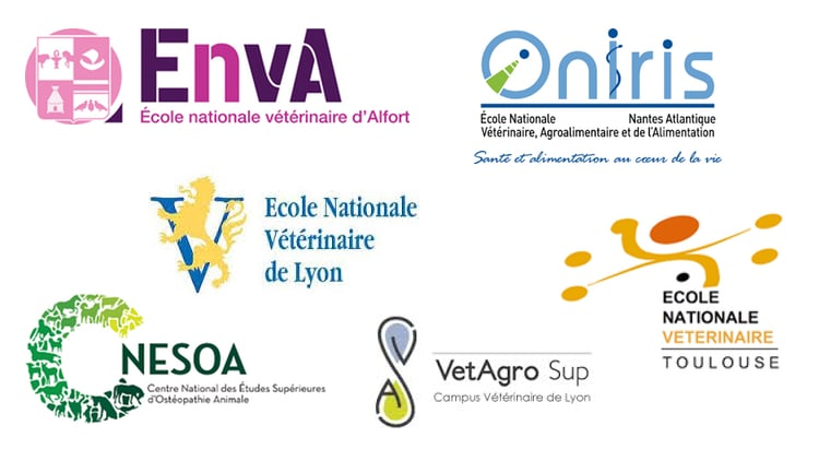 formation infirmiere veterinaire